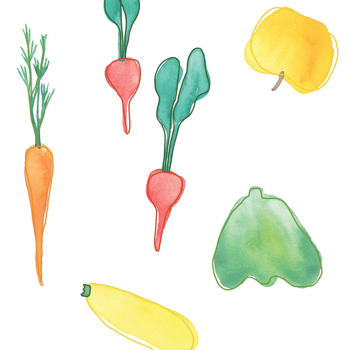 watercolor illustrations, custom illustration vegetables