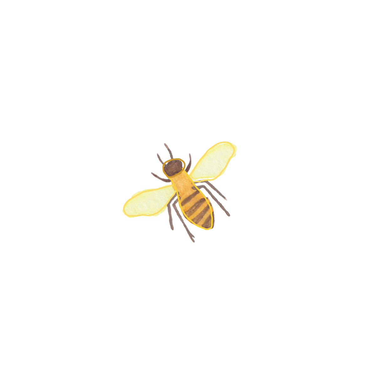 bumble bee watercolor illustration