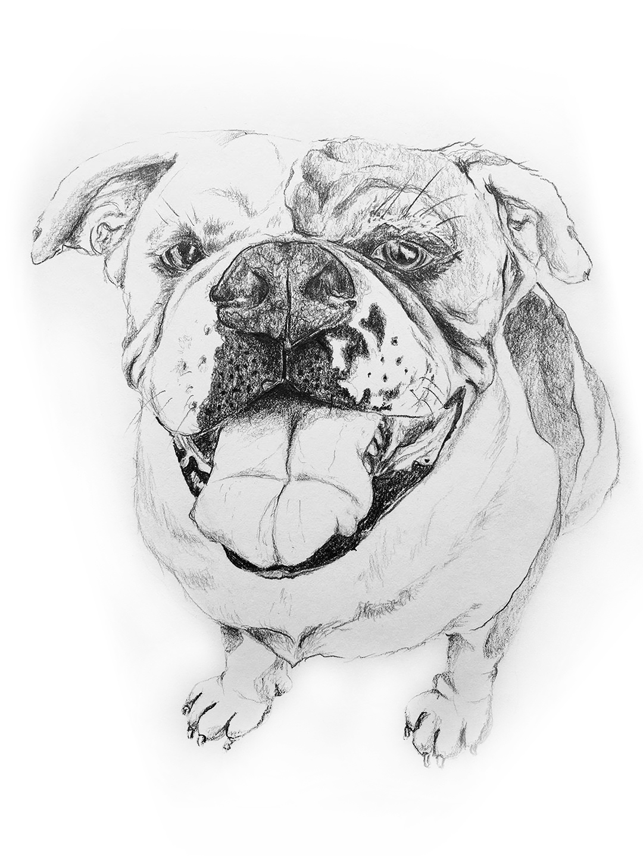 Bulldog by LK Weiss