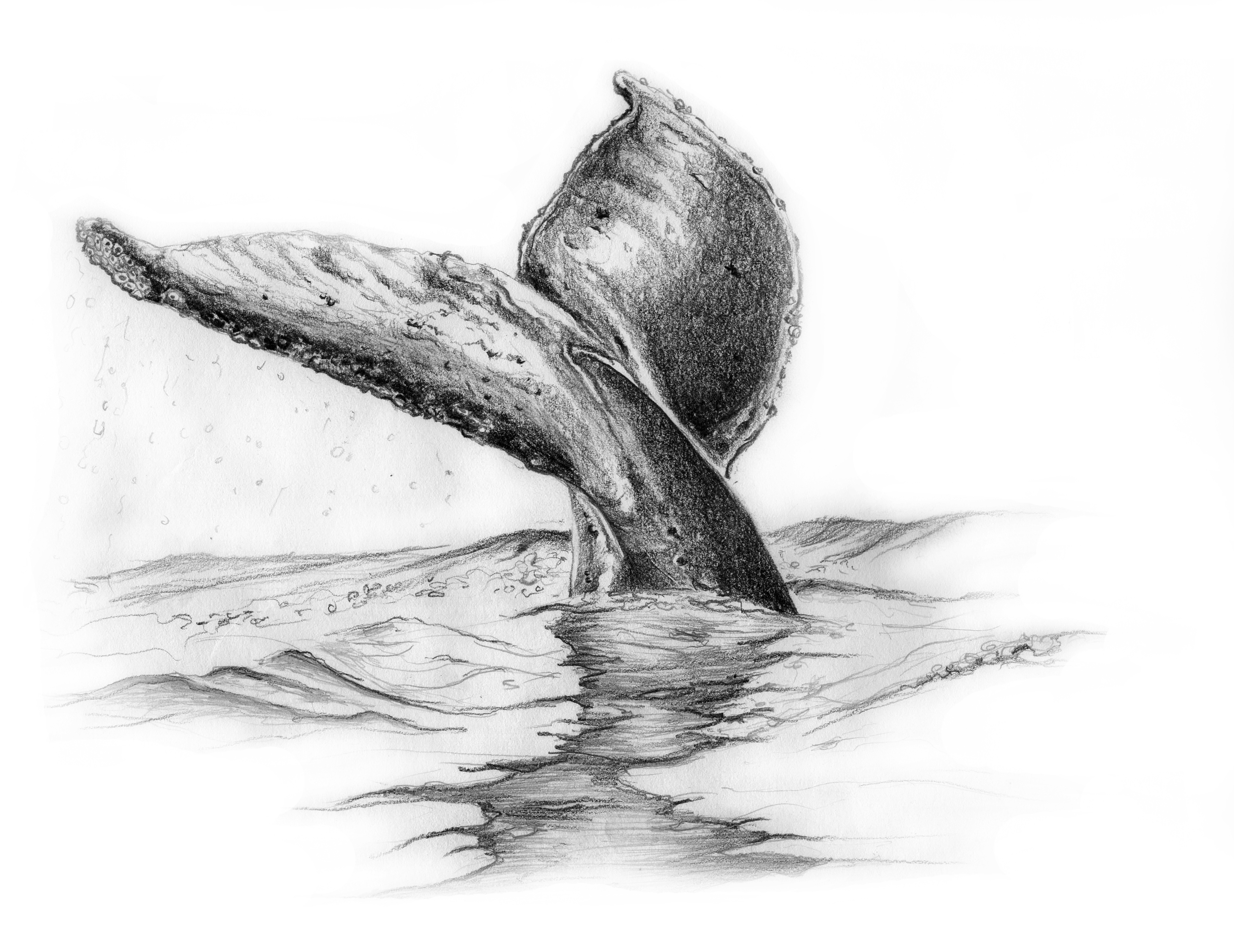 Whale Tail by LK Weiss