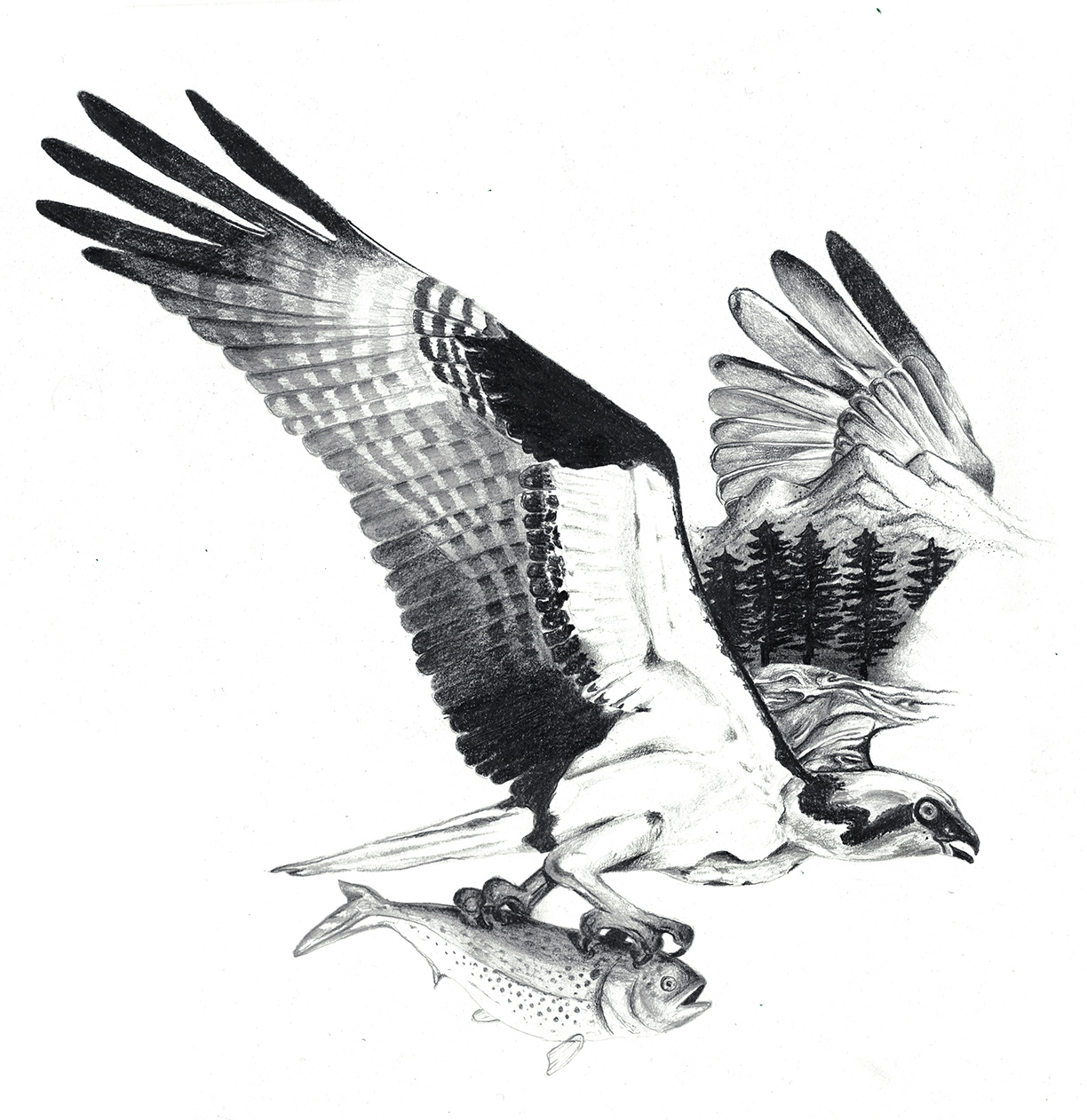 Osprey by LK Weiss