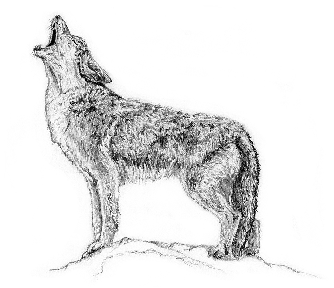 Coyote by LK Weiss