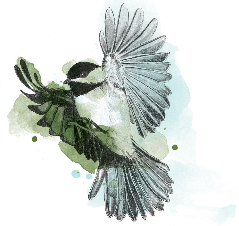 Chickadee by LK Weiss