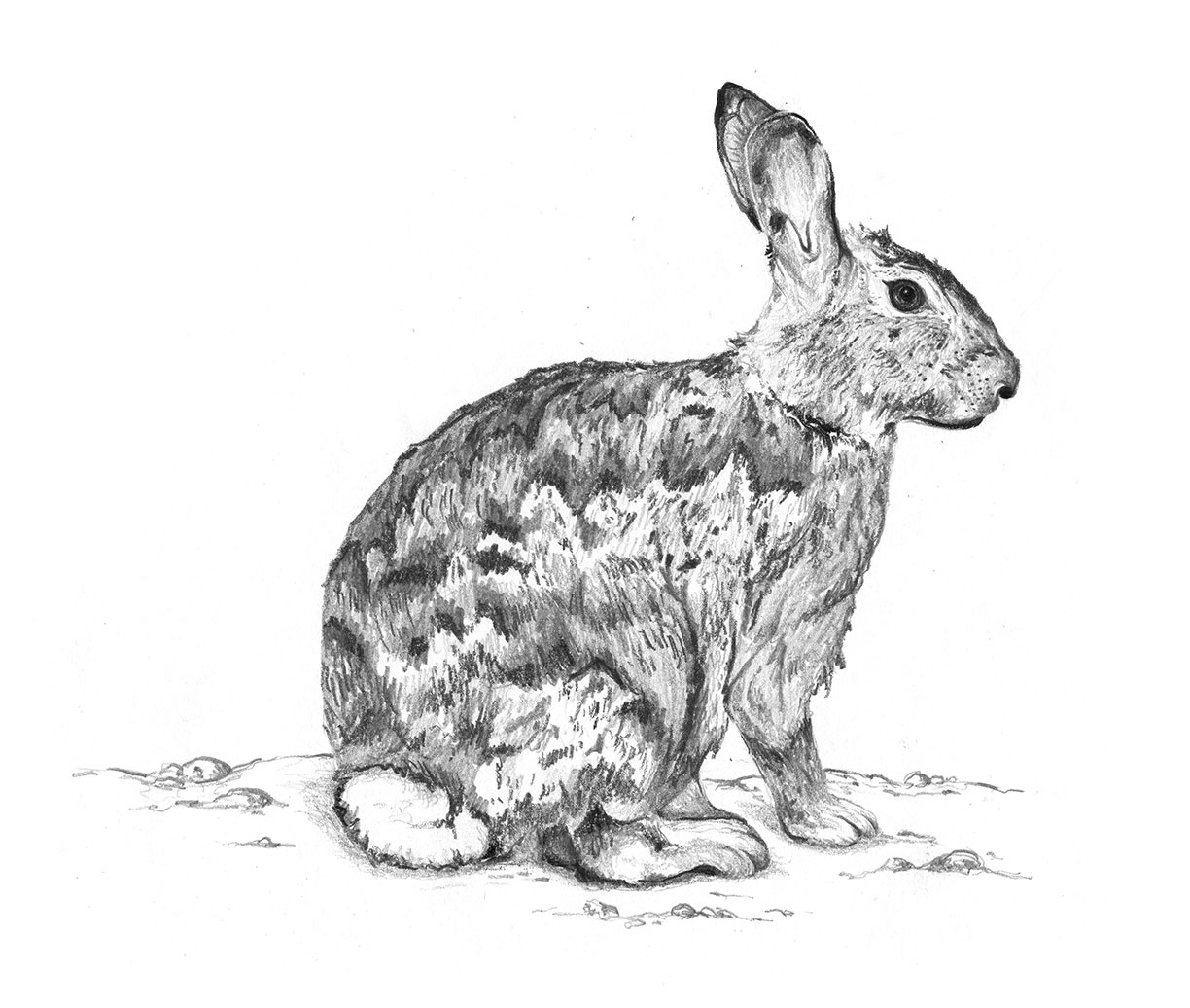 Cottontail by LK Weiss