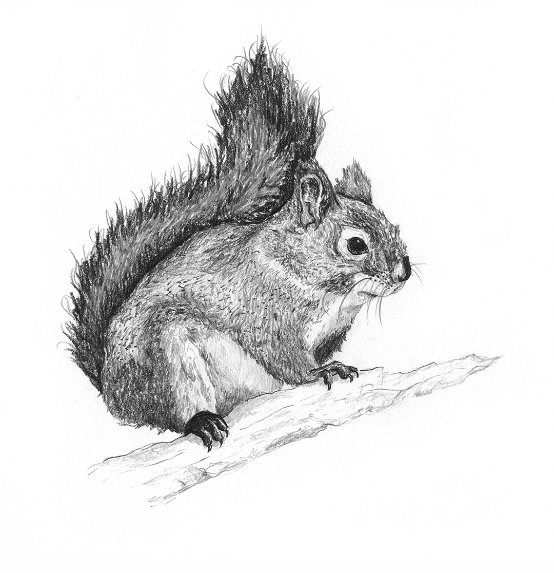 Red-Squirrel.web.jpg