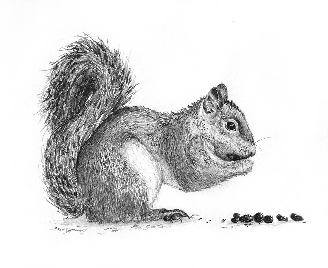 Gray-Squirrel.Edited.jpg