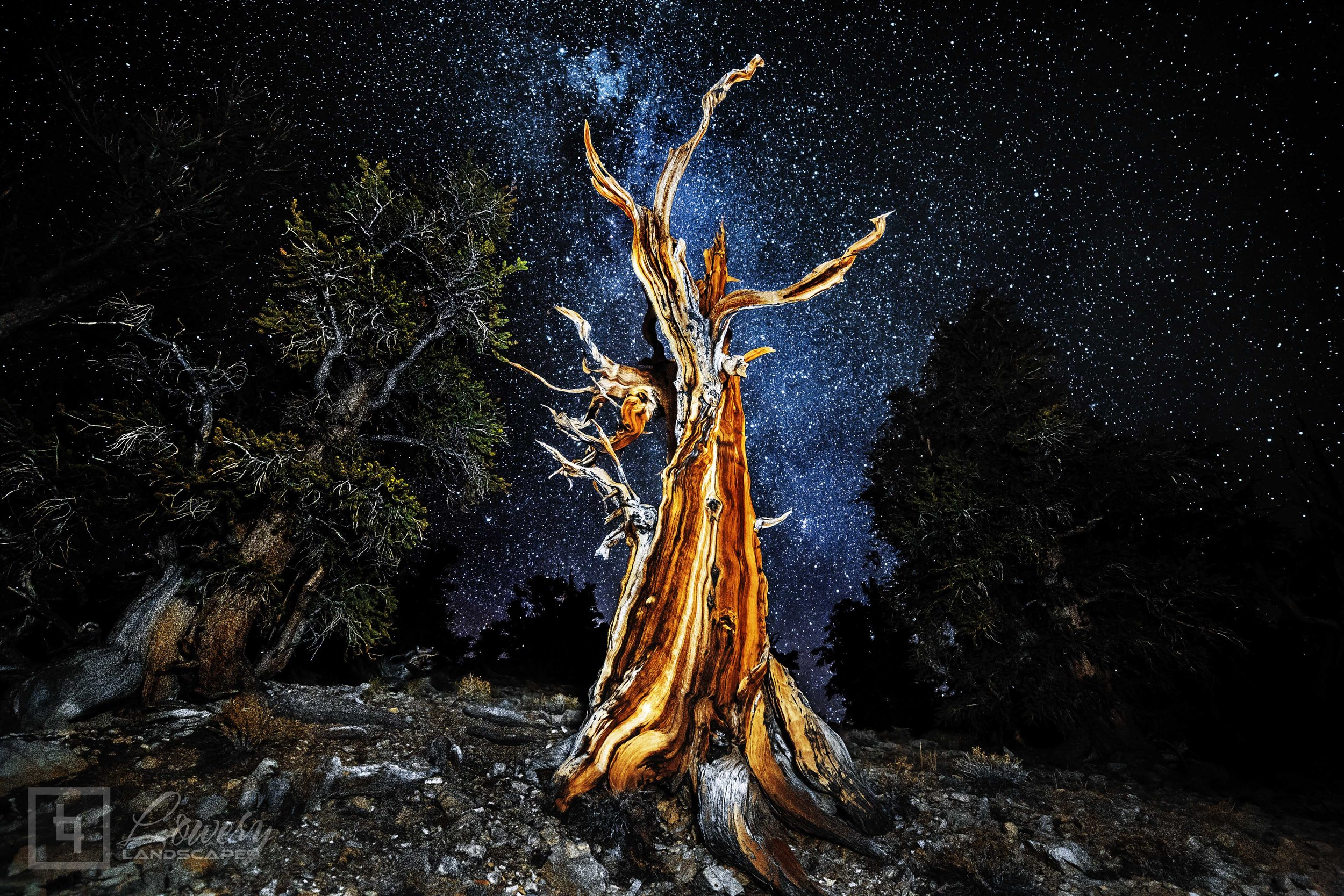 A nearly 5000 year old Bristlecone Pine reaches up to the Milky Way near the 11,280 foot summit of one of California's White Mountains, lit by the single LED on the back of my iPhone during this exposure.