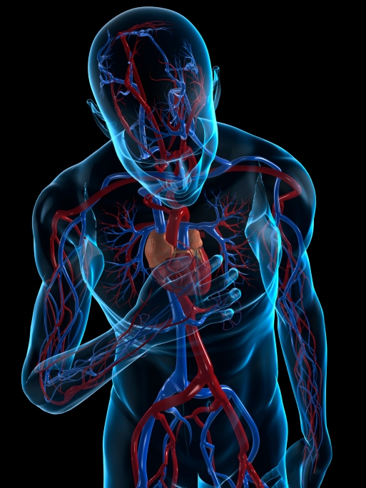 Al hablar de enfermedades cardiovasculares se hace referencia a aquellos padecimientos que afectan al corazón y vasos sanguíneos , por tanto, se incluyen trastornos cardiacos y vasculares.  El corazón y los vasos sanguíneos conforman el sistema circulatorio que conduce y hace fluir la sangre por todo el organismo llevando oxígeno, nutrientes y hormonas a las células del cuerpo y recogiendo los desechos metabólicos que se han de eliminar posteriormente por los riñones a través de la orina y en los pulmones por el aire exhalado.  La fuerza necesaria para que la sangre llegue a todo el cuerpo por medio de la red de vasos sanguíneos es proporcionada por el corazón, que bombea todo el volumen de sangre del organismo ( 5 litrosaproximadamente ) 70 veces por minuto.   En un ciclo continuo, el corazón recibe sangre oxigenada (  roja  ) proveniente de los pulmones y la bombea hacia las arterias . También capta sangre sin oxígeno (  azul  ) que retorna a través de las venas y la bombea hacia los pulmones.   Sin embargo, este ciclo puede verse alterado o interrumpido por diversos factores dando lugar a las enfermedades cardiovasculares, que actualmente, son la principal causa de muerte en el mundo, sobre todo favorecidas por malos hábitos alimenticios y de estilo de vida, obesidad , hipertensión arterial , diabetes y niveles de colesterol elevado .   Tipos de enfermedades cardiovasculares    Arteriosclerosis . Endurecimiento de las arterias que dificulta la circulación e incrementa el riesgo de formación de ateromas (placas de colesterol y calcio, entre otras sustancias), pues en estas arterias rígidas se fijan con facilidad las grasas que circulan en exceso en la sangre. Su incidencia aumenta según avanza la edad de las personas, así como por factores como obesidad, tabaquismo y falta de actividad física regular.   Aterosclerosis . Acumulación de productos de desecho celular (ateromas o placas) en las grandes arterias, que llegan a afectar significativamente el flujo sanguíne