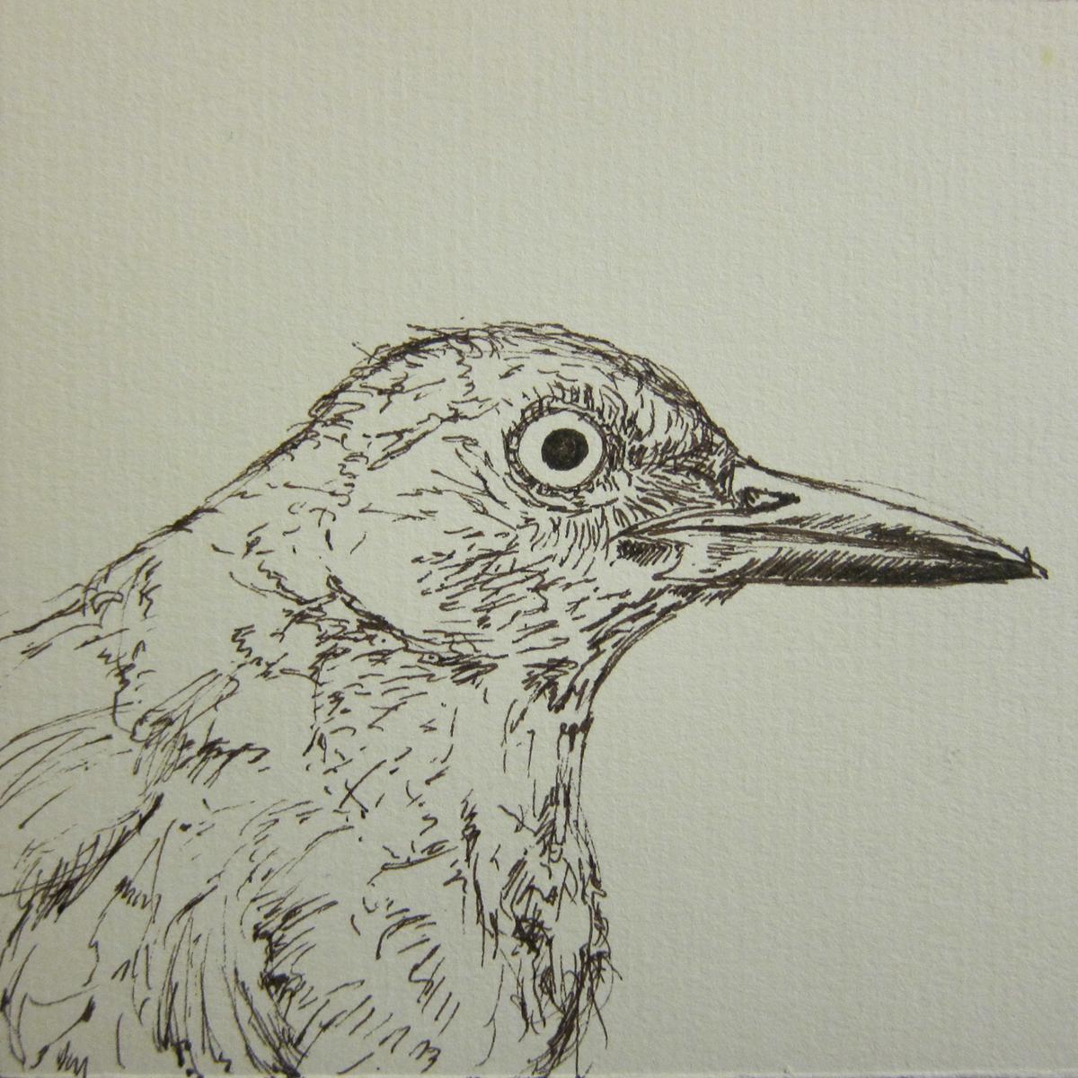 BlackbirdLine.jpg