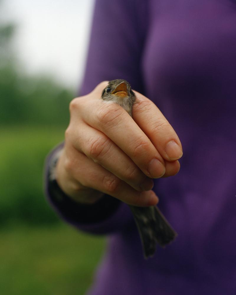 Flycatcher in Hand