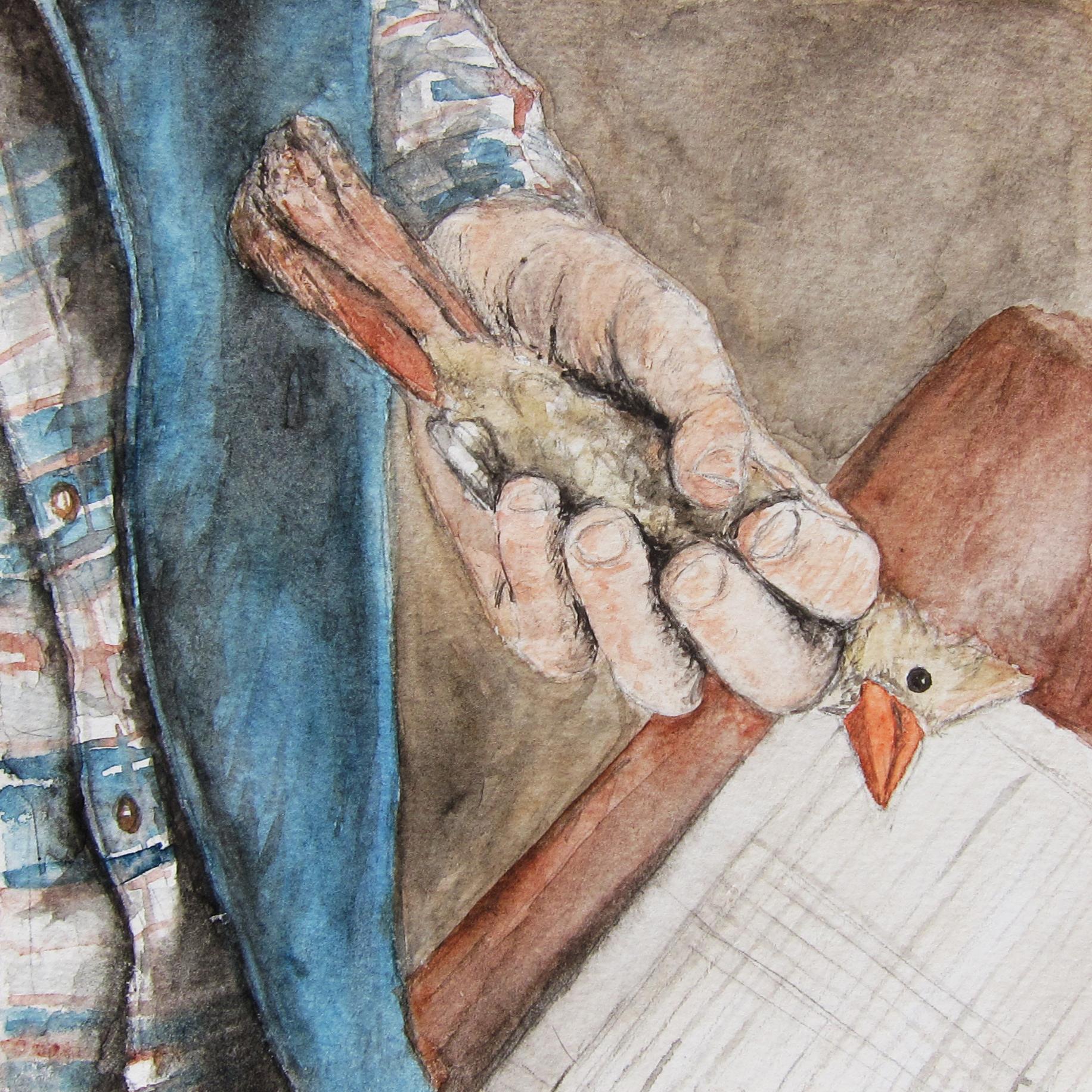 Cardinal in Hand