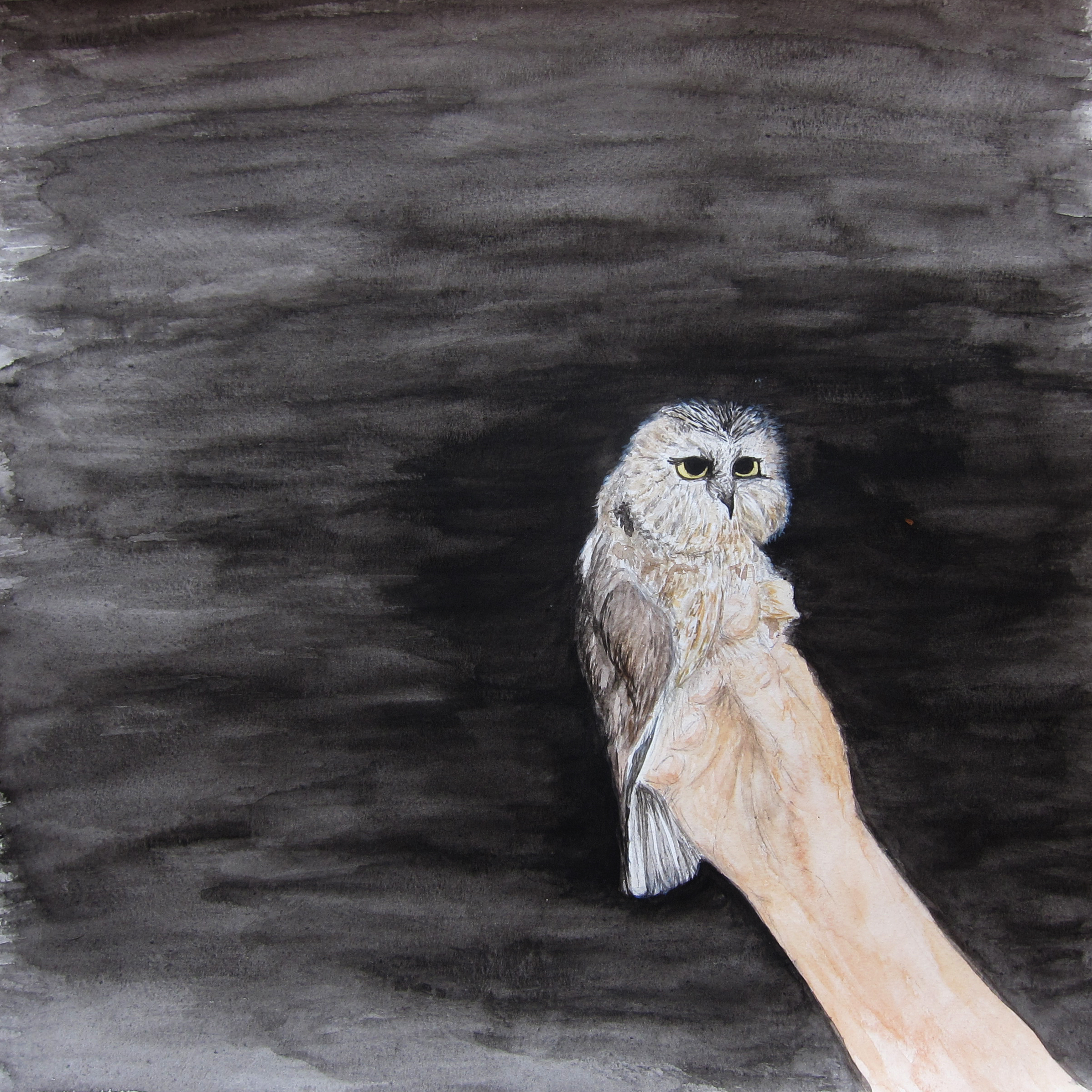 Saw-whet in Hand