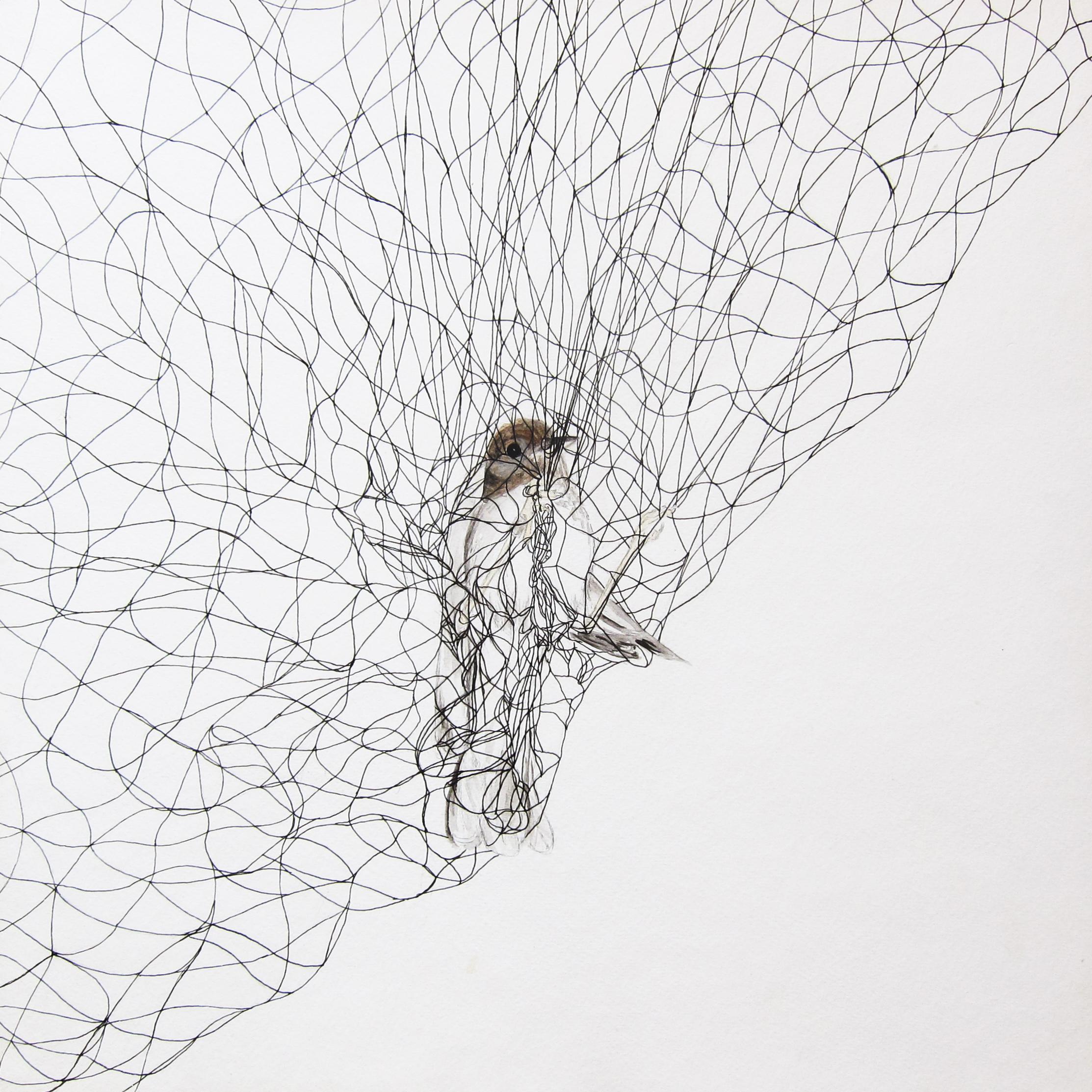 Veery in Net