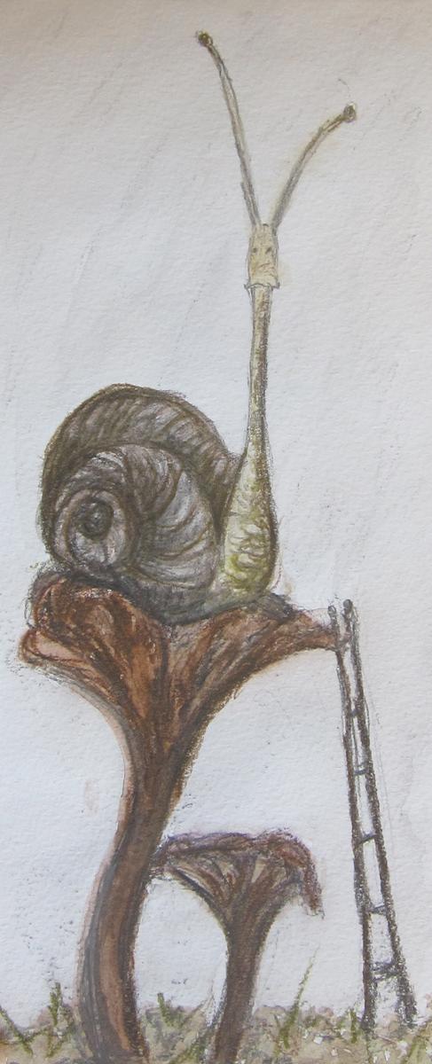 SnailLadder.jpg