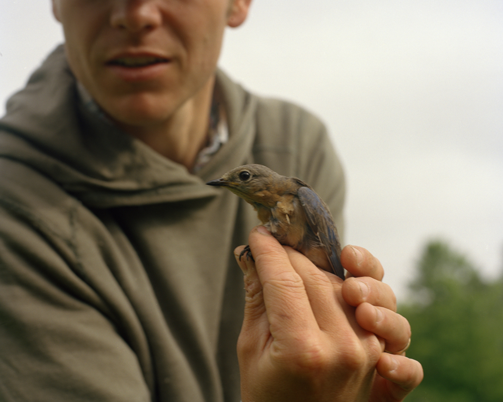 Patrick with a Momma Bluebird