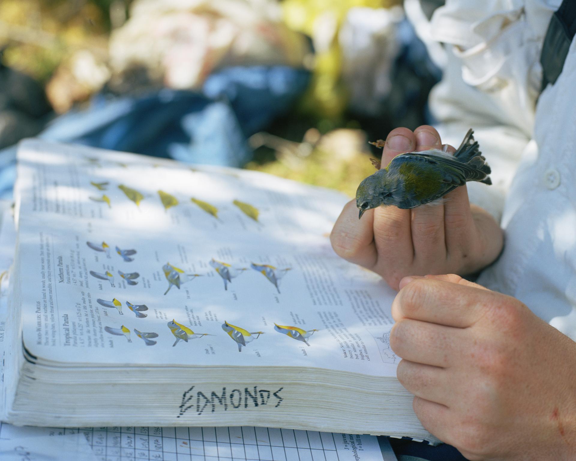 Perula and Bird Book