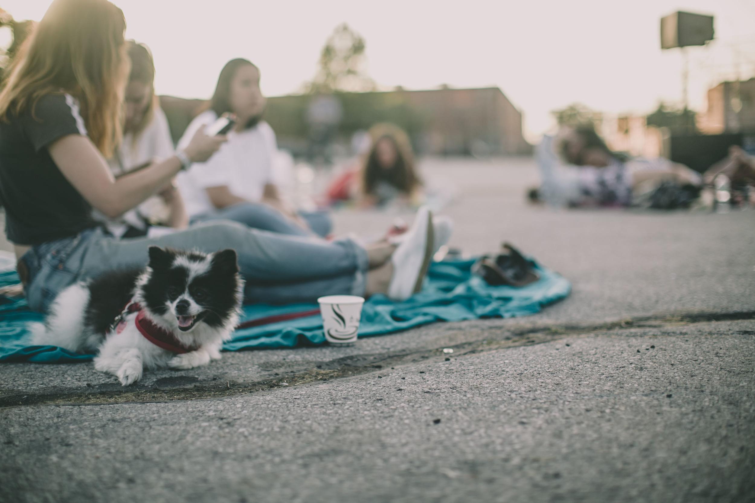 Summerscreen Dog Dick-4.jpg