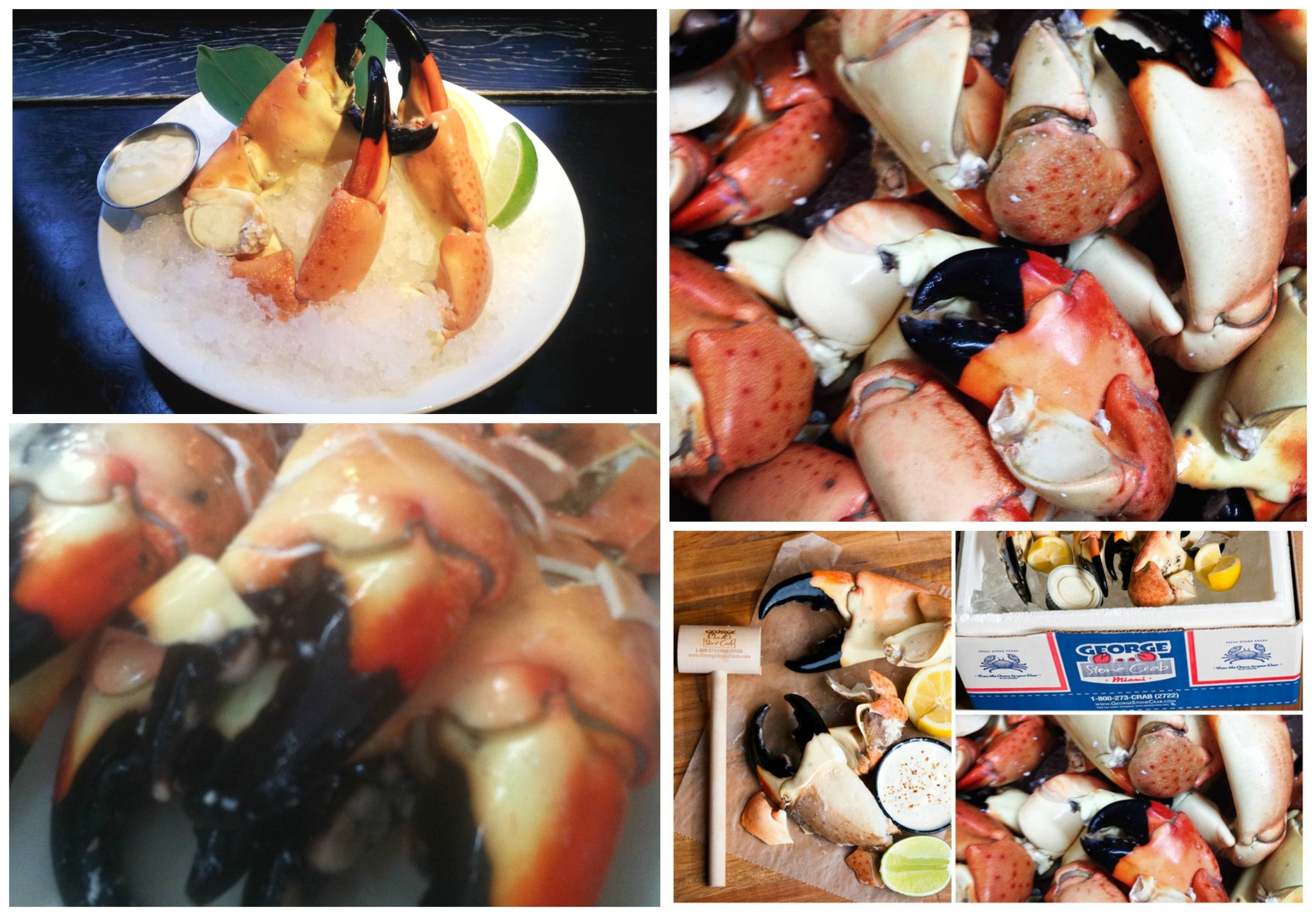 Stone Crabs in Miami End of Season 2016