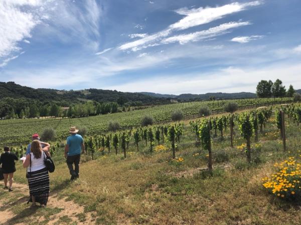 ONX Wine fields