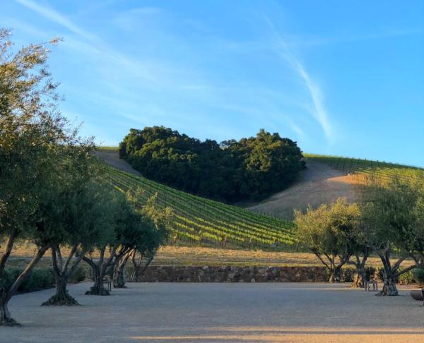 Heart Hill at Niner Wine Estates