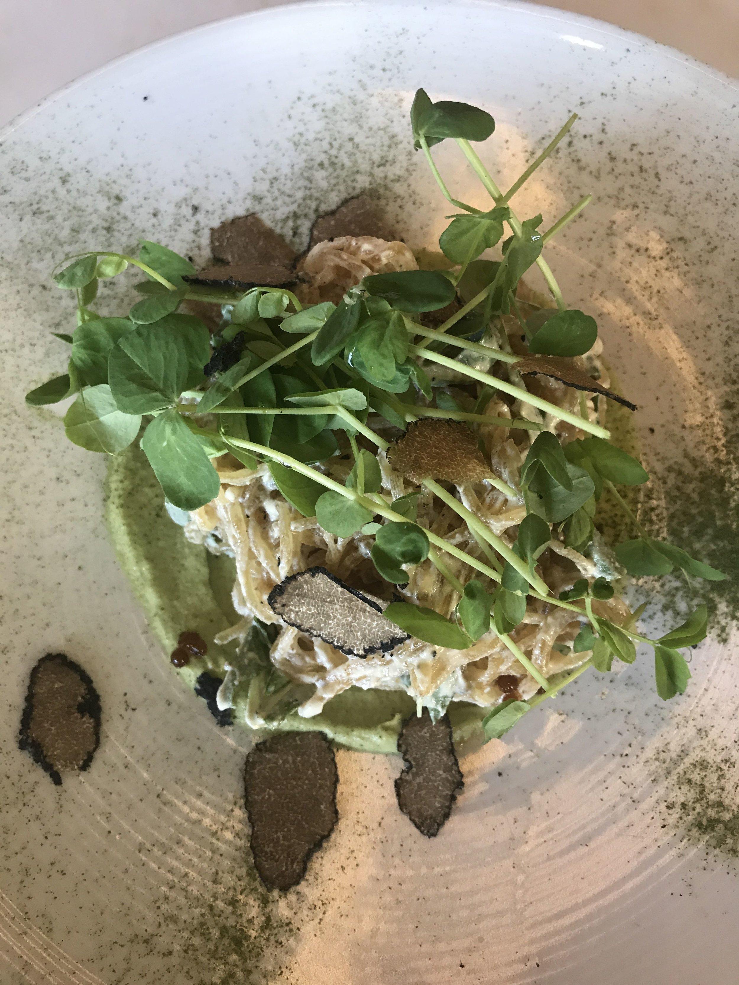 Plant Miami Cacio del Funghi