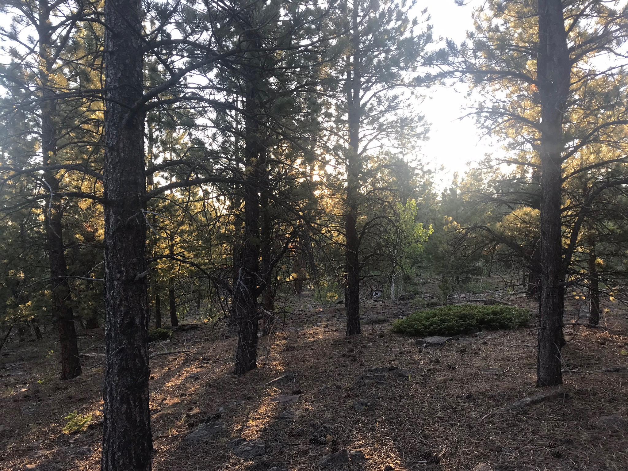 That is where I was free. Whole universes of imagination were created each day. We kids ruled the forest.