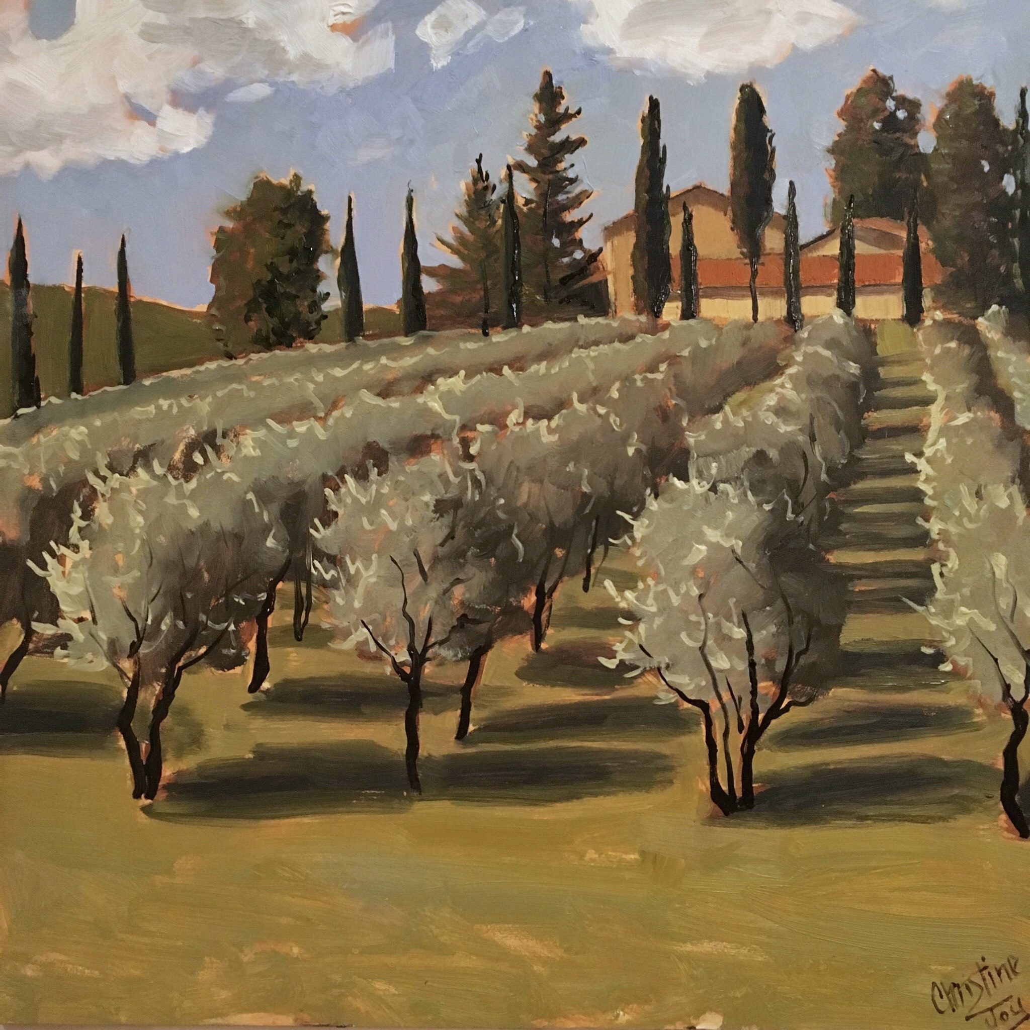 Olive Orchard in Italy