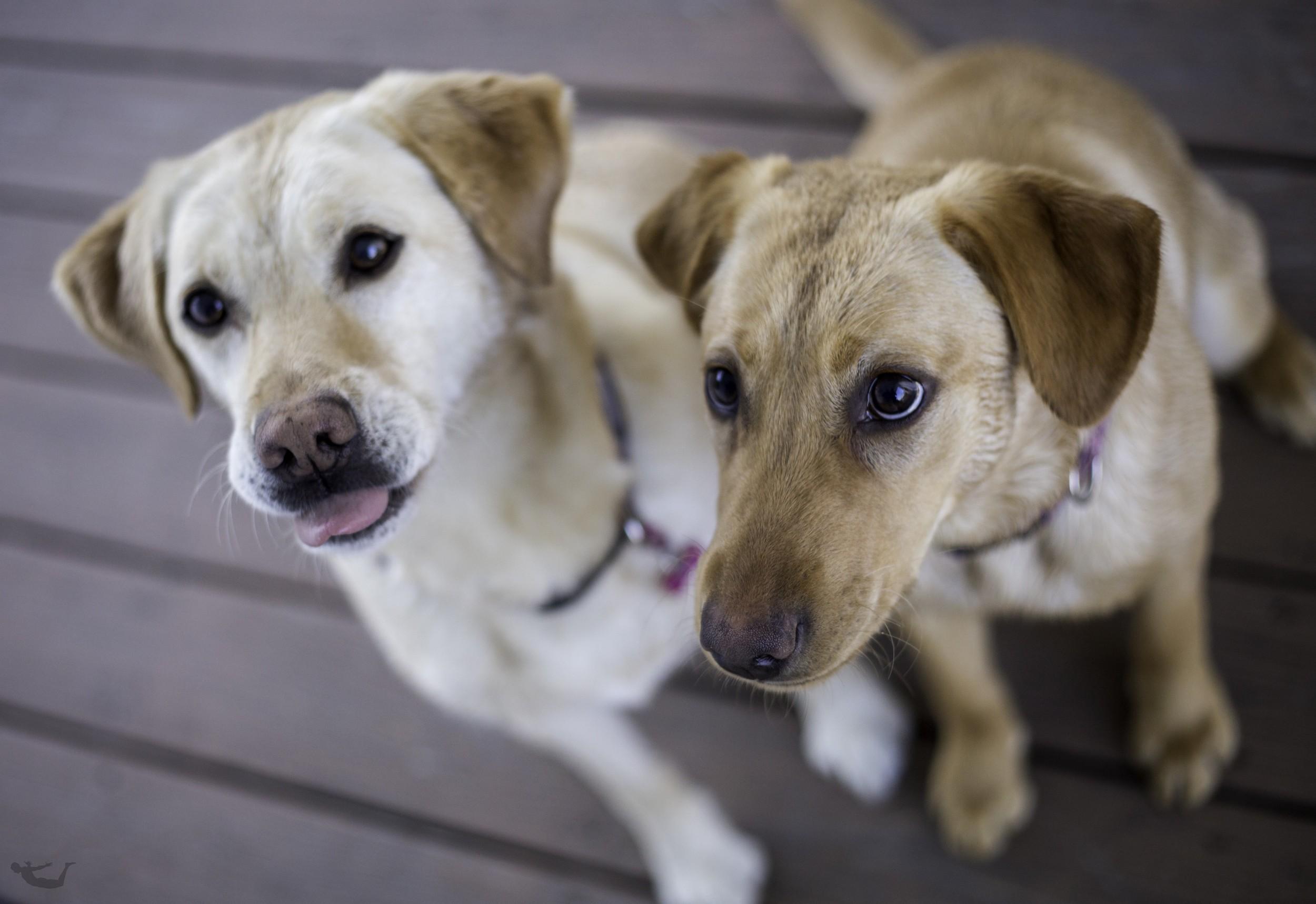 The Dogs.sm.jpg
