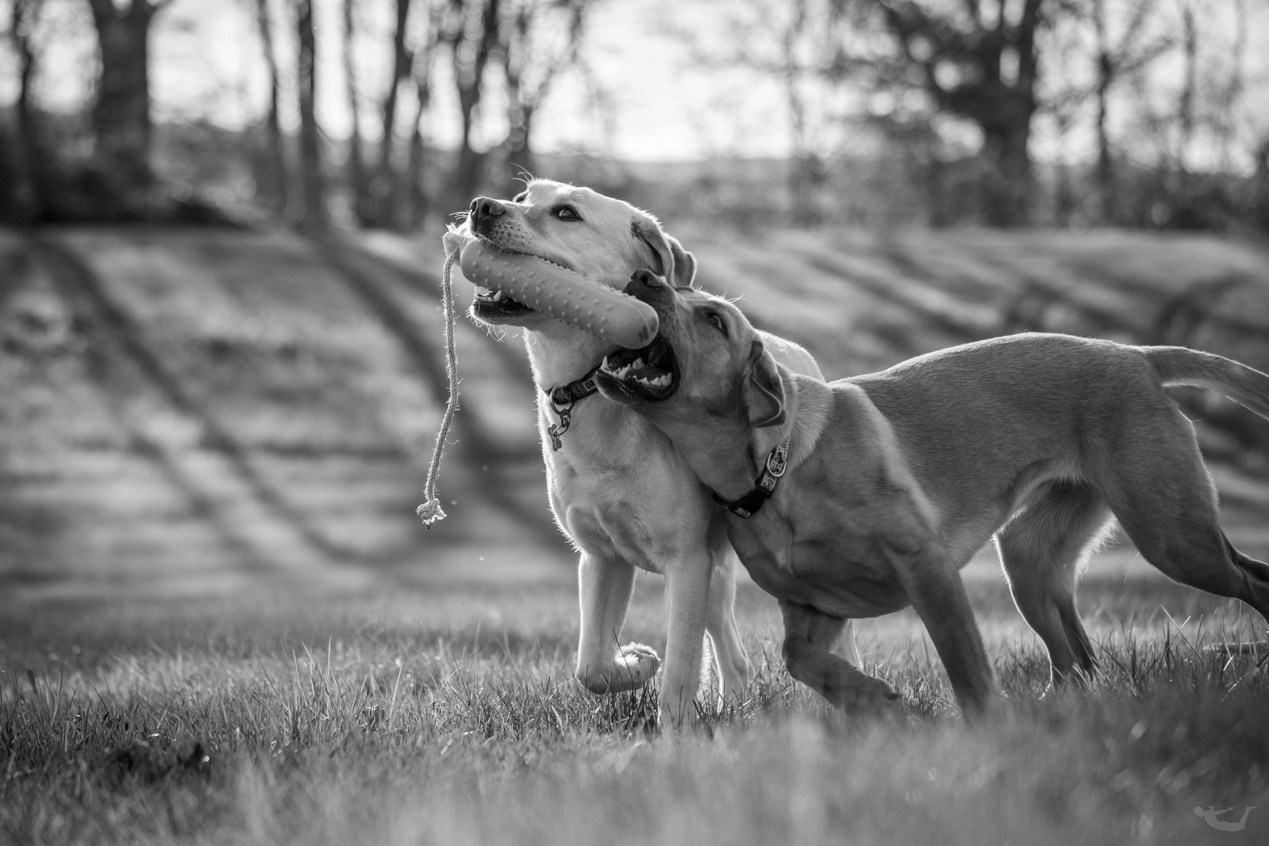 The Puppies.sm.jpg