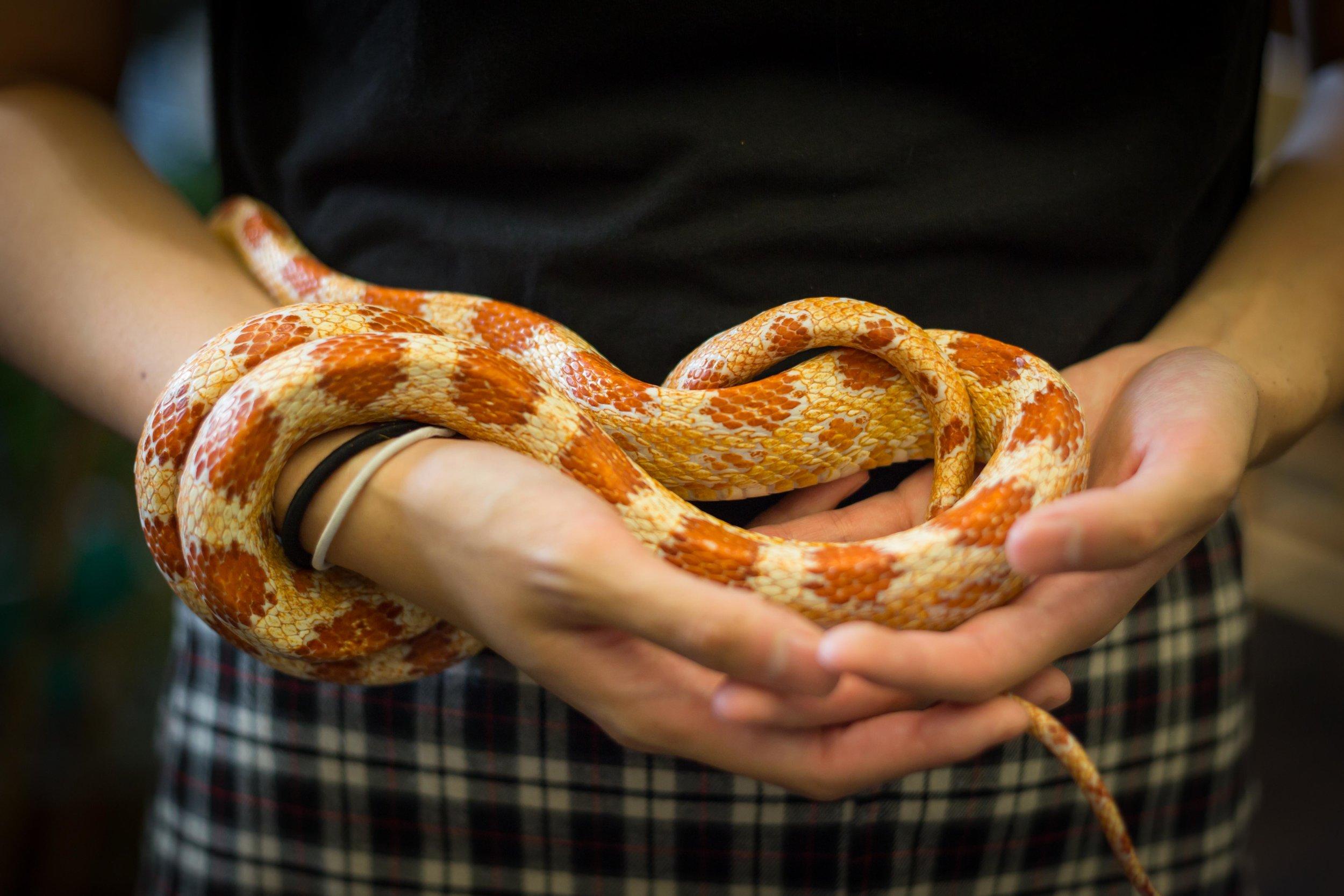 Albino snakes!_.JPG