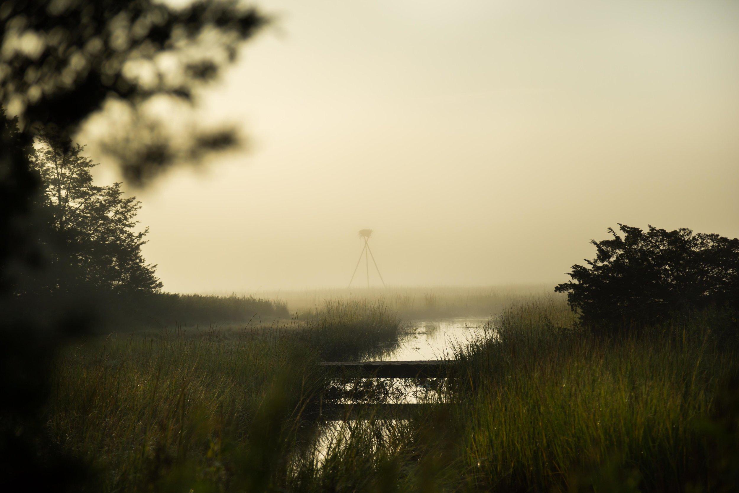 Osprey in the morning?_.JPG