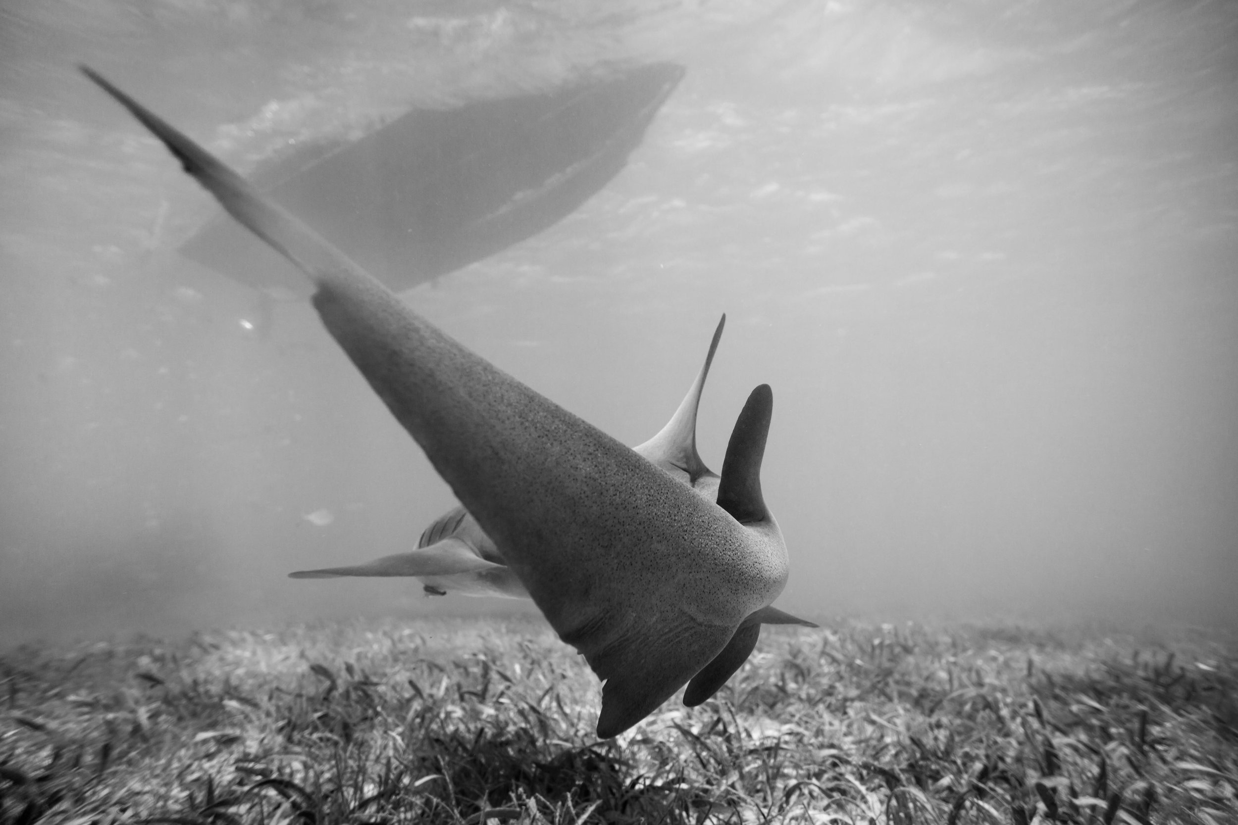 Just a shark Tale.JPG