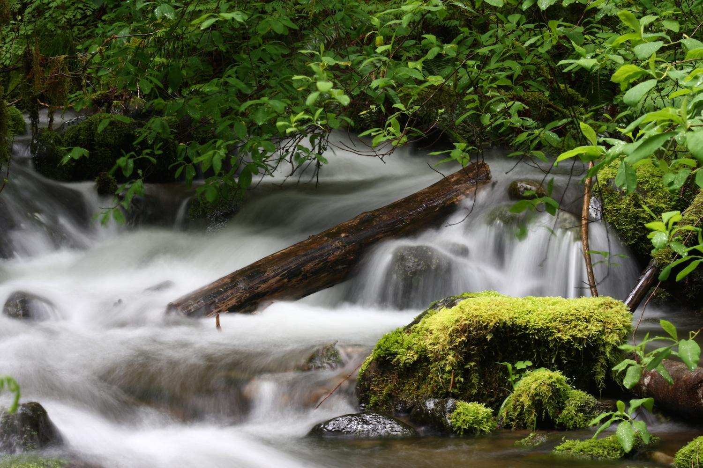 water log.JPG