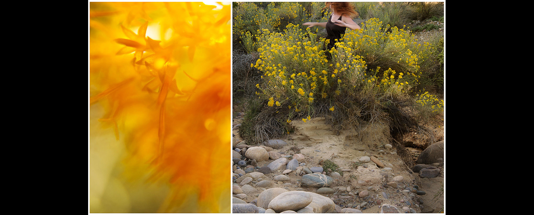 Rayless Goldenrod: I thought I had taken every     precaution  .