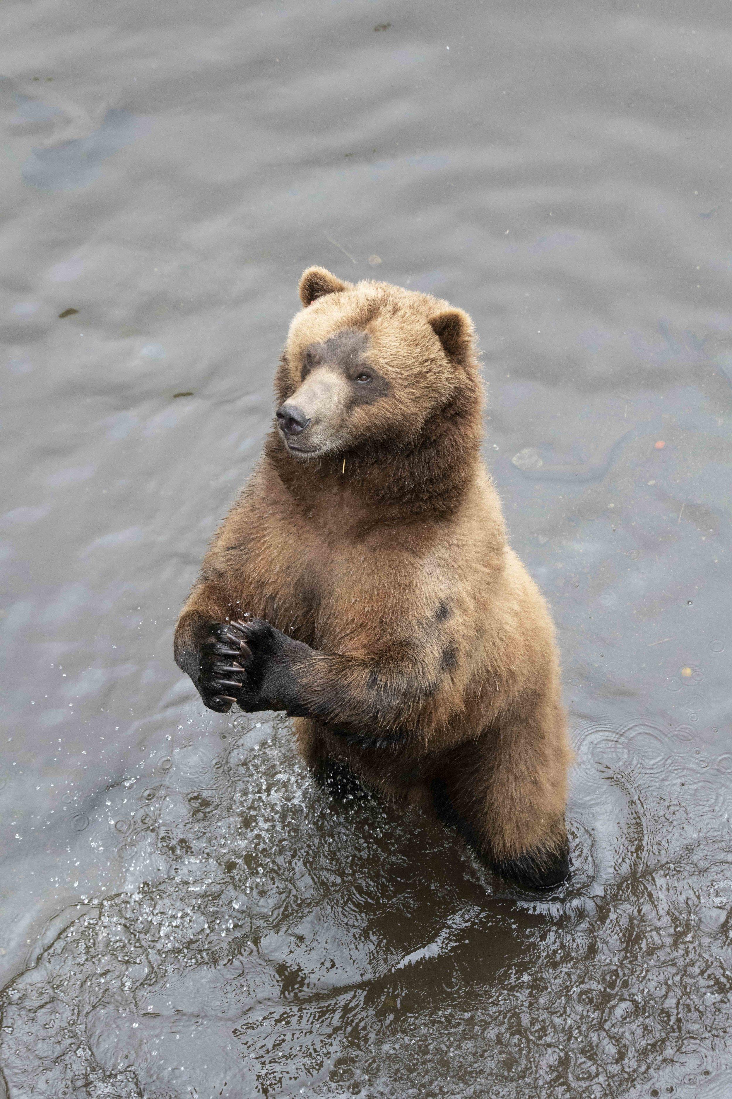 Praying for Salmon Doc.jpg