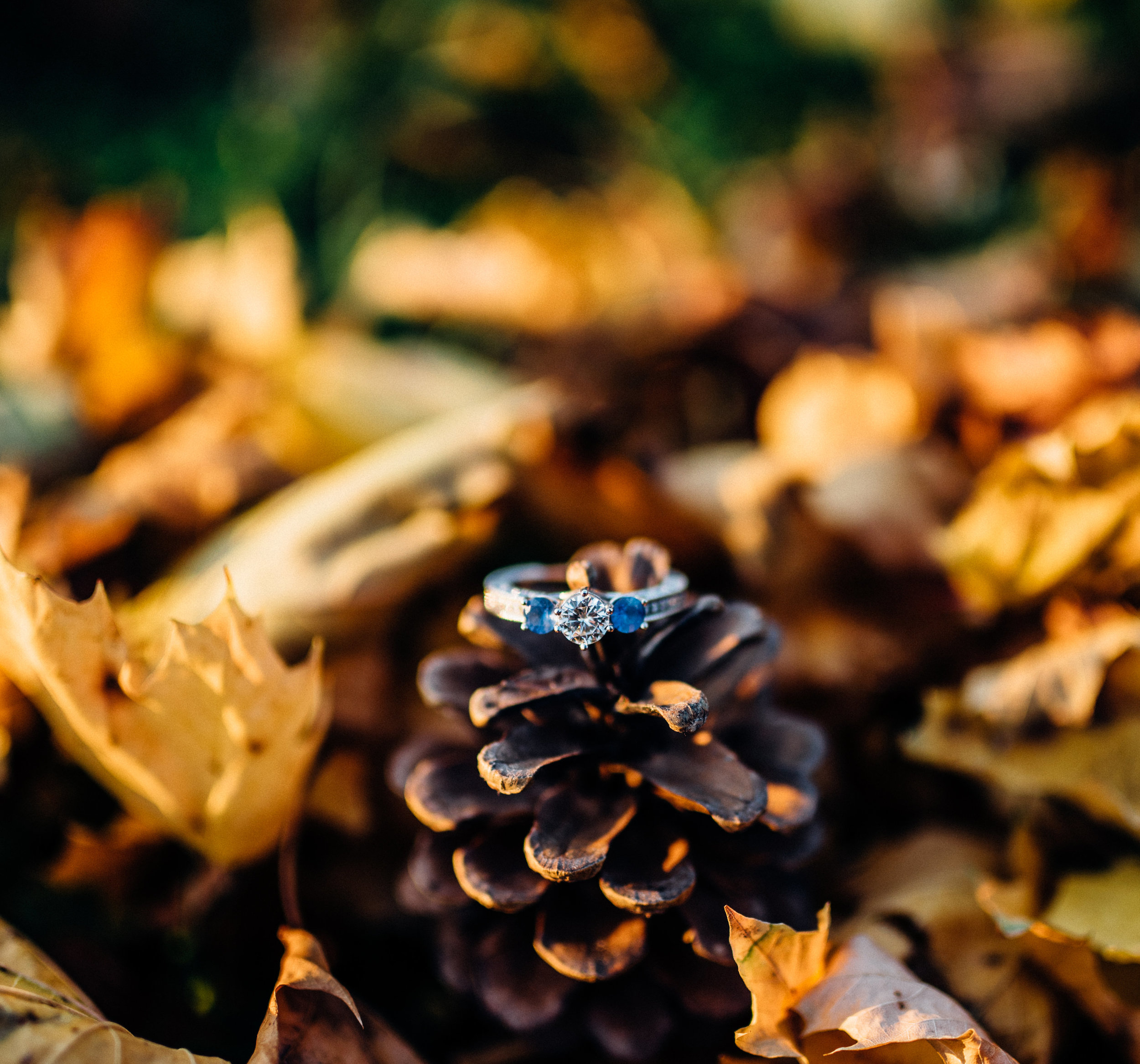 Pam_and_Mike_engagment_fall_2015-48.jpg
