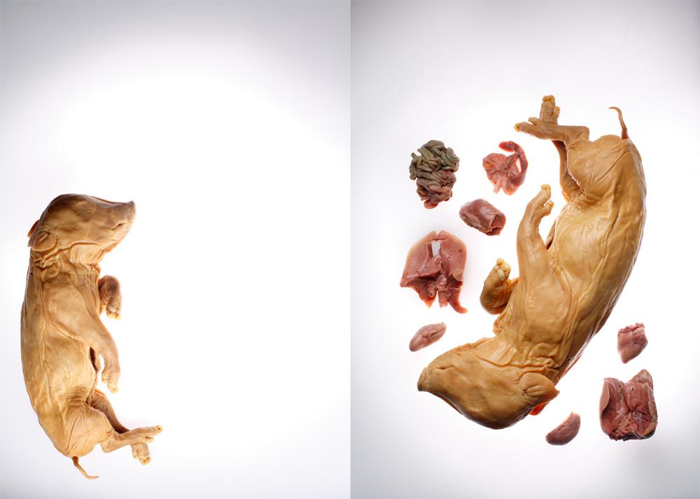 10_animal_model_kits.jpg