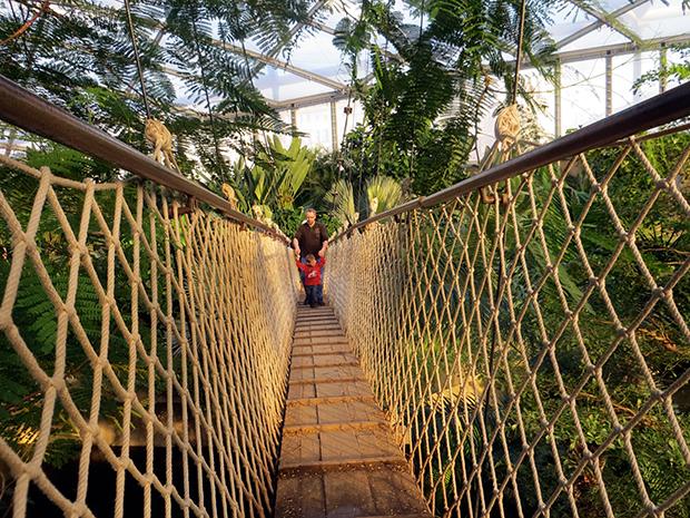 Dream Street Pictures - Zoo Revolution - bridge