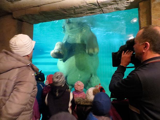 Children watch an elephant swim, Zoo Revolution, Dream Street Pictures