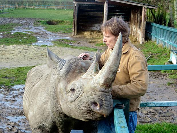 Rhino, Zoo Revolution, Dream Street Pictures