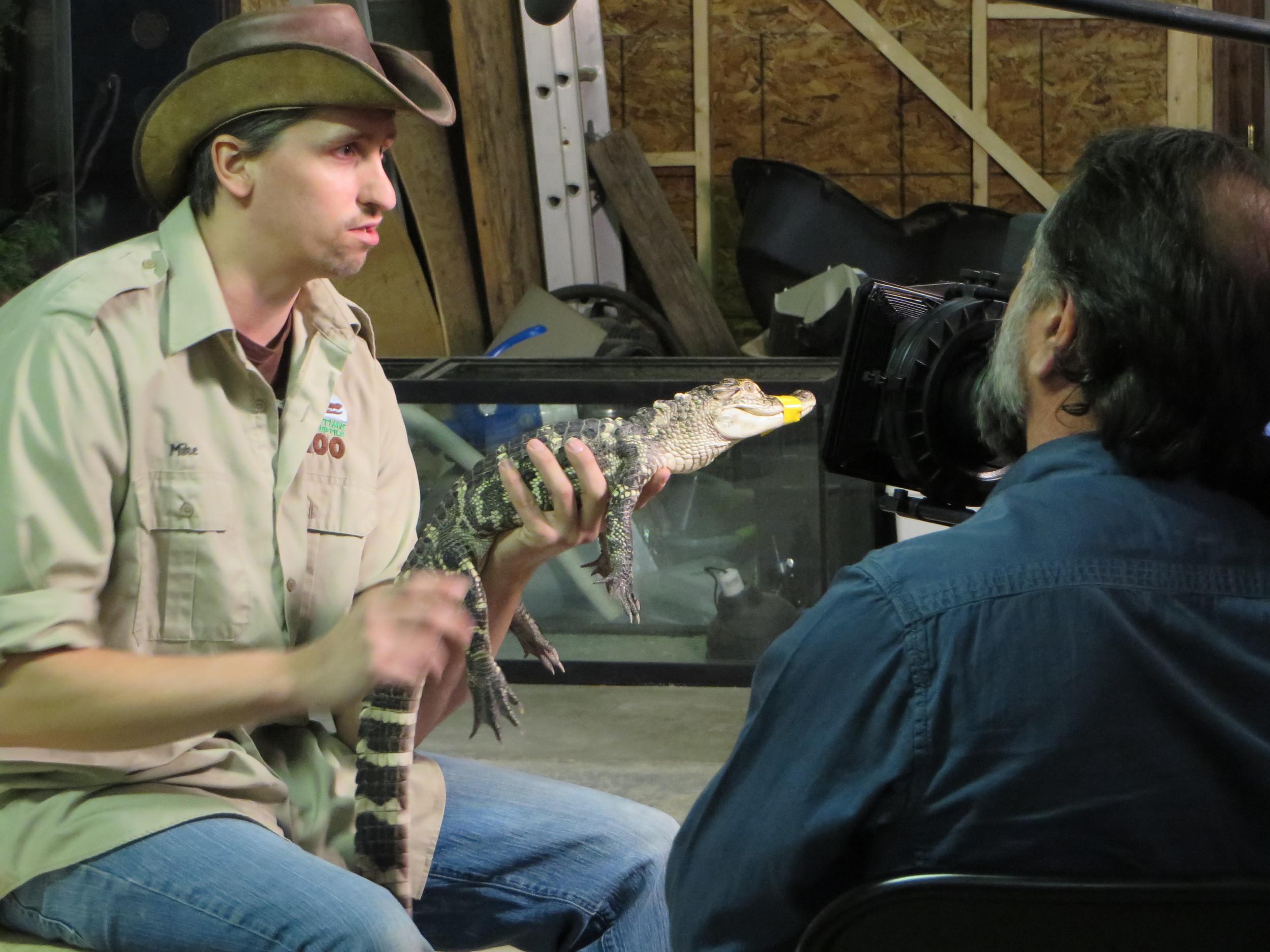 Mike MacDonald, curator at Maritime Reptile Zoo, with Ducky (Baby American Alligator), Nova Scotia - original.jpg