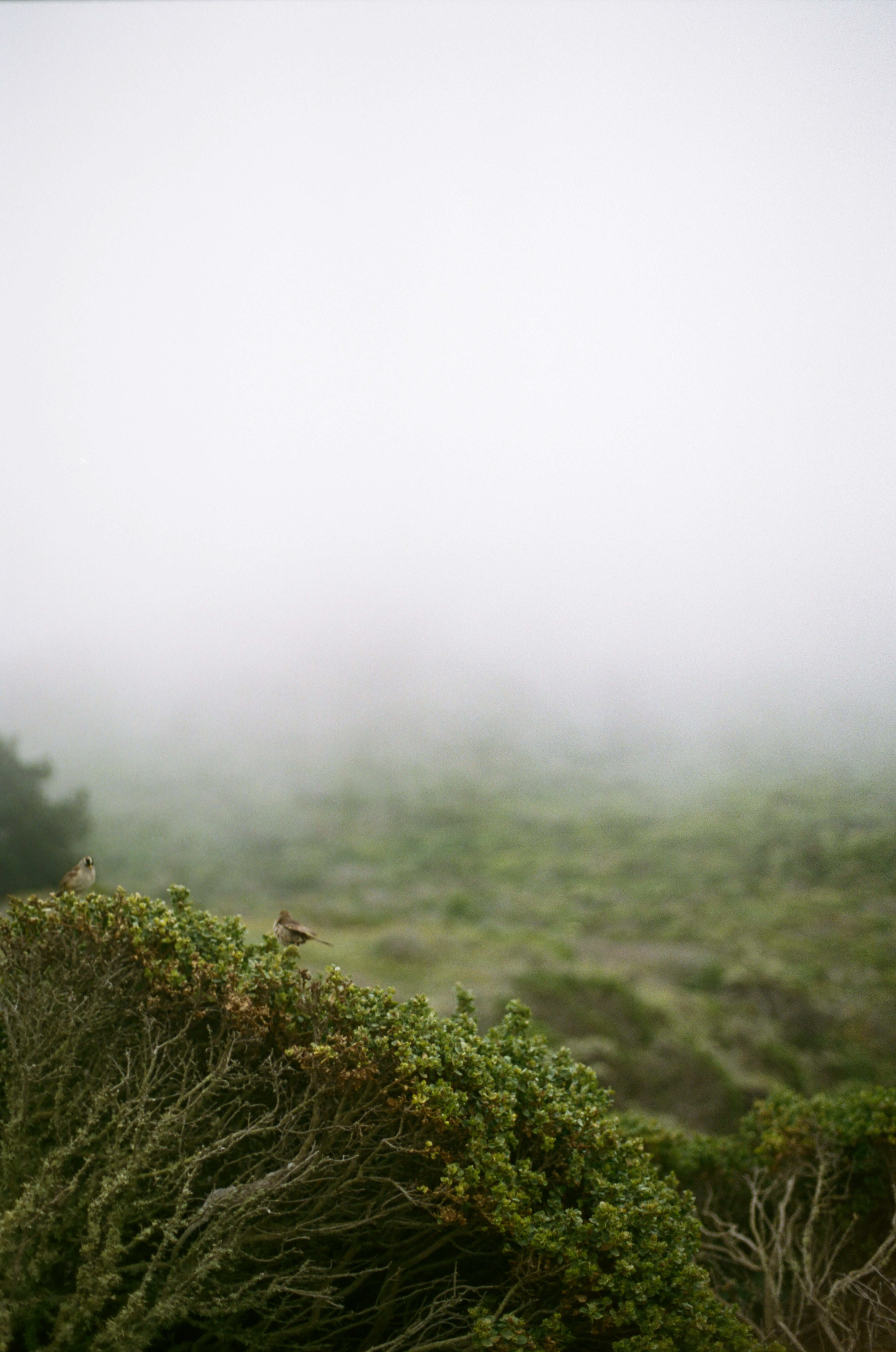 portra 400 fog