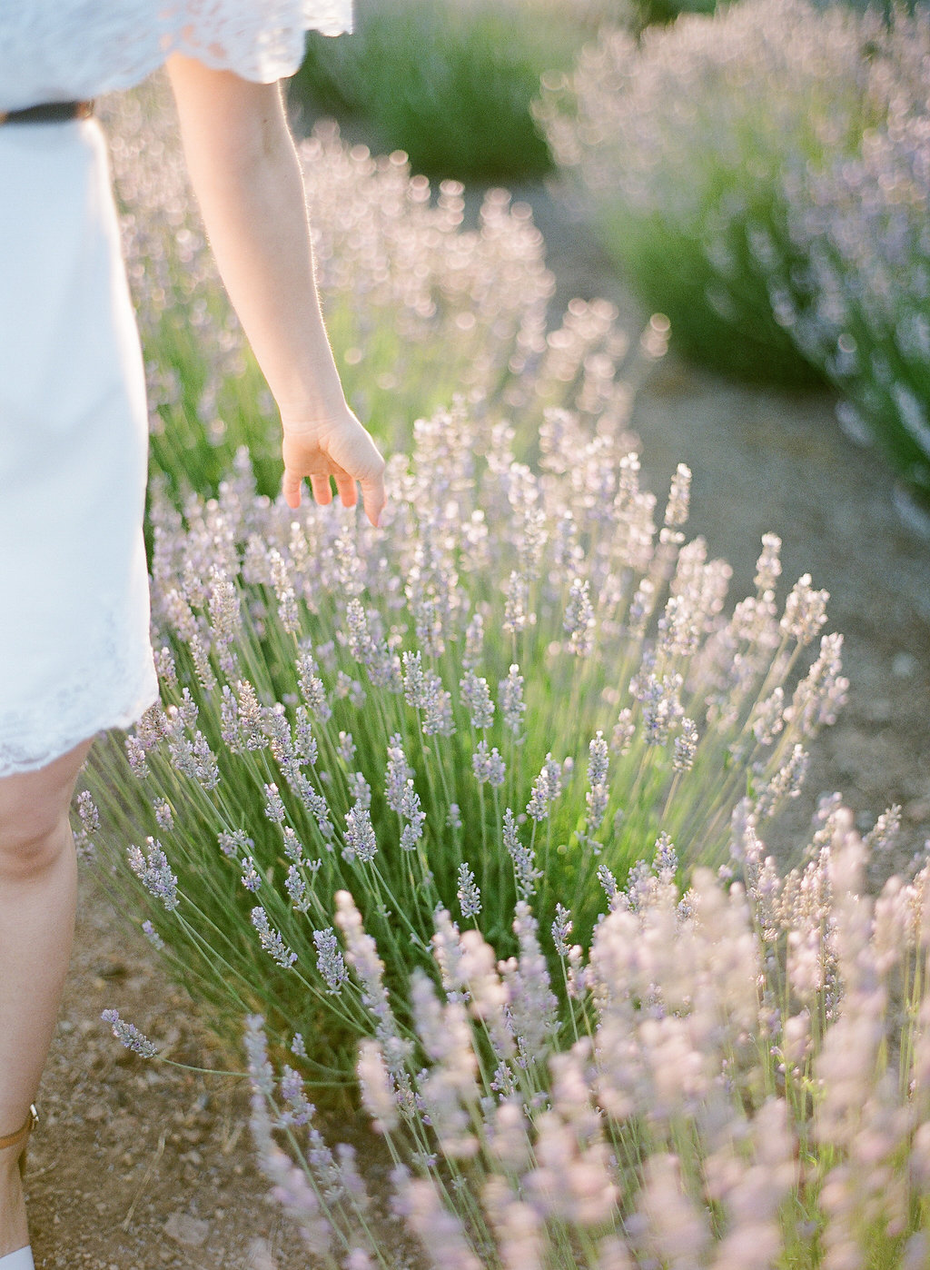 Romantic Lavender field Engagement Session | Sonoma Napa San Francisco Fine Art Film Photographer