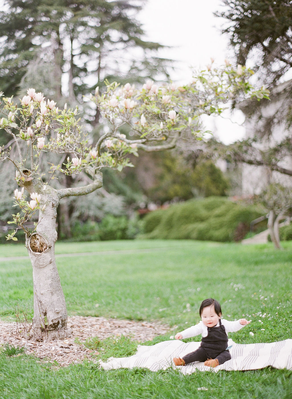 San Francisco Berkeley Magnolia Bloom Film Family Photographer - Spring Family Session