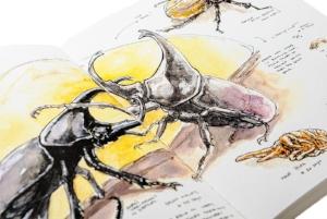 ART BOOK -