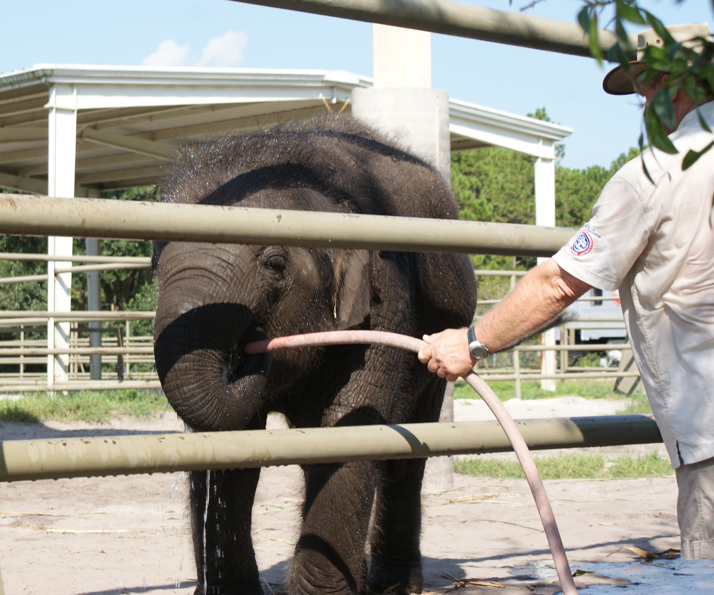 Elephant Conservation Ctr Aug 2014 015.JPG