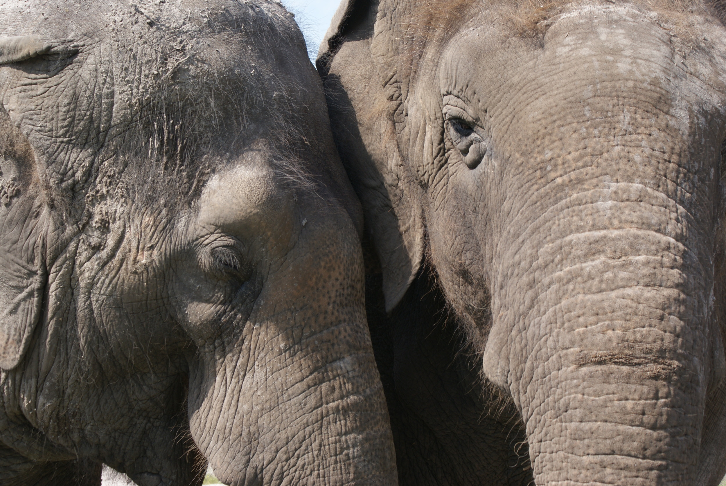 Elephant Conservation Ctr Aug 2014 040.JPG