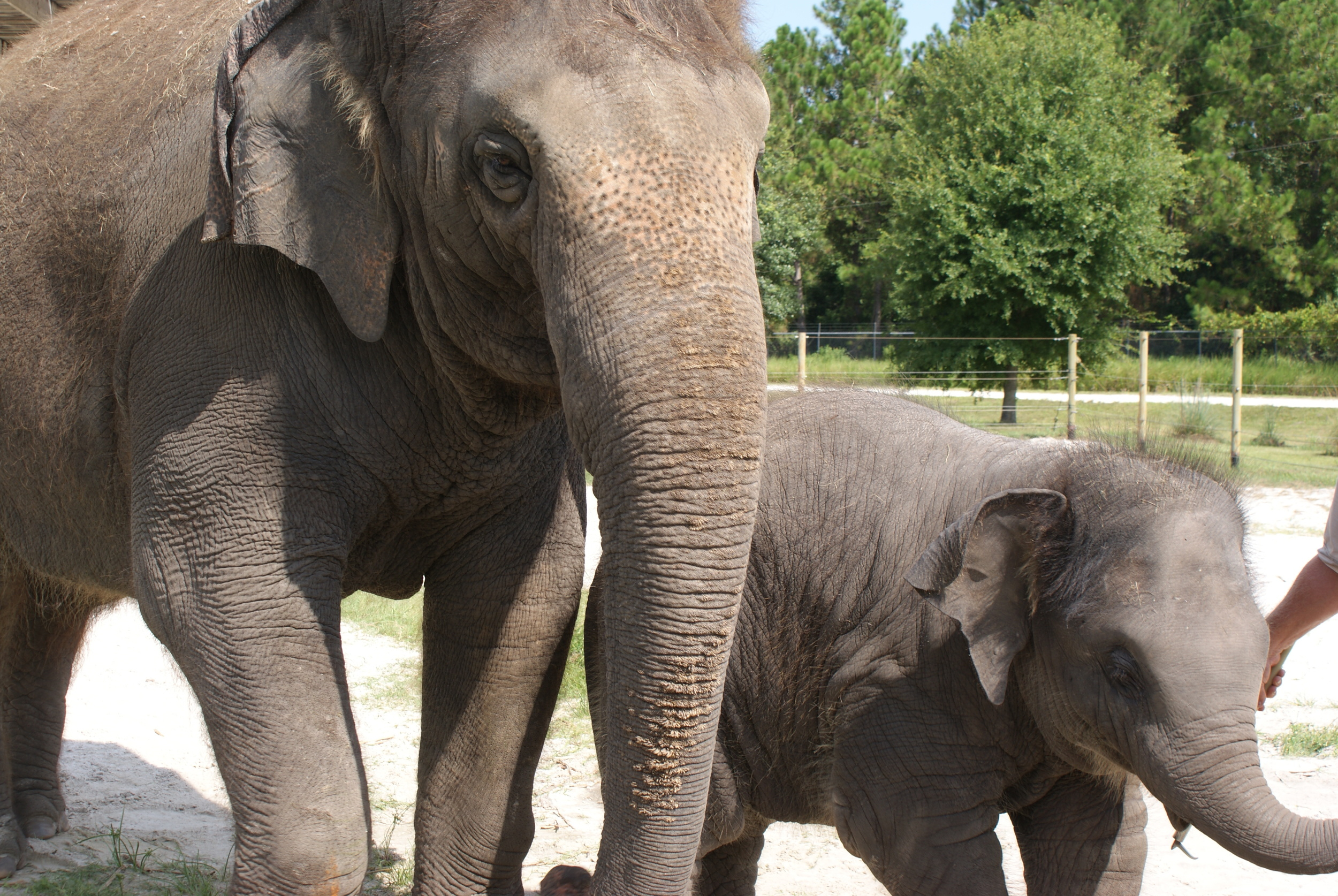 Elephant Conservation Ctr Aug 2014 148.JPG