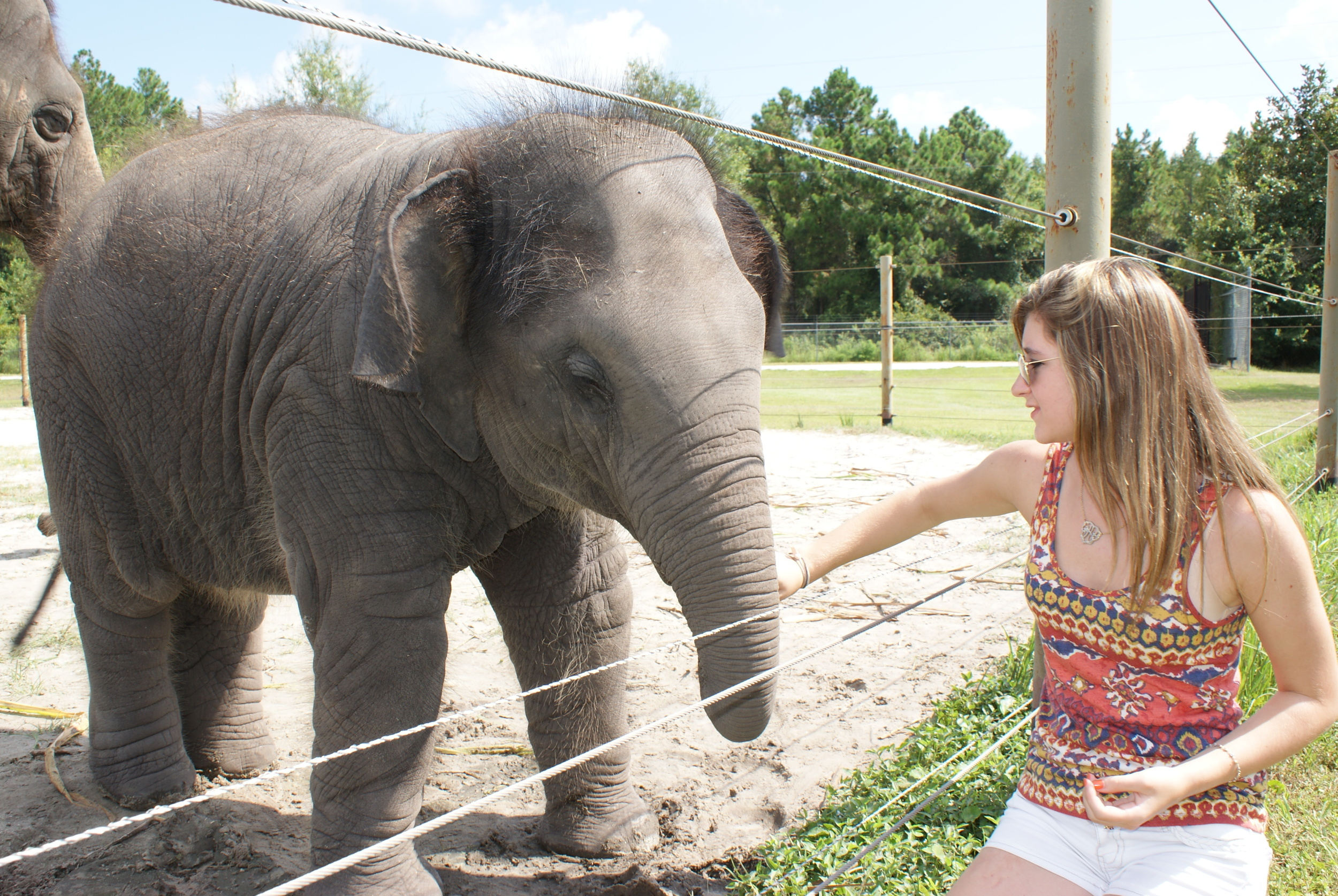 Elephant Conservation Ctr Aug 2014 154.JPG