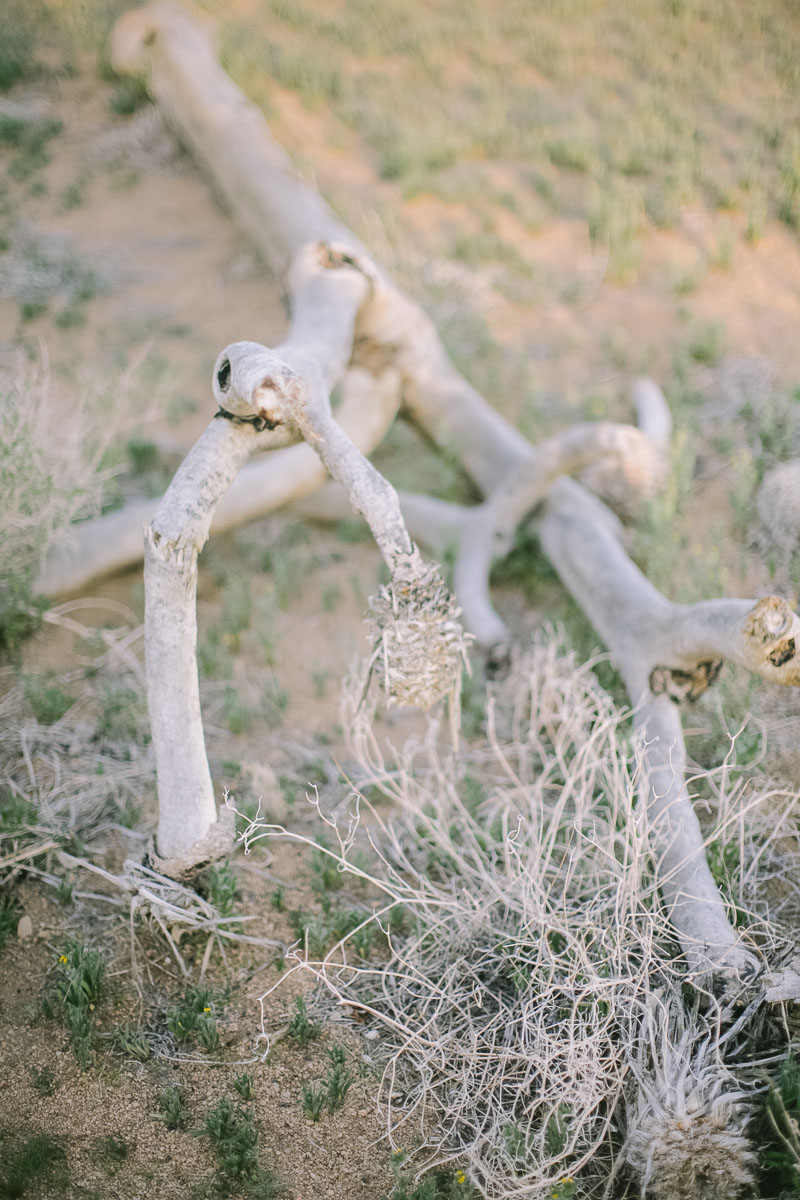 Palm Springs wedding photographer-30.jpg